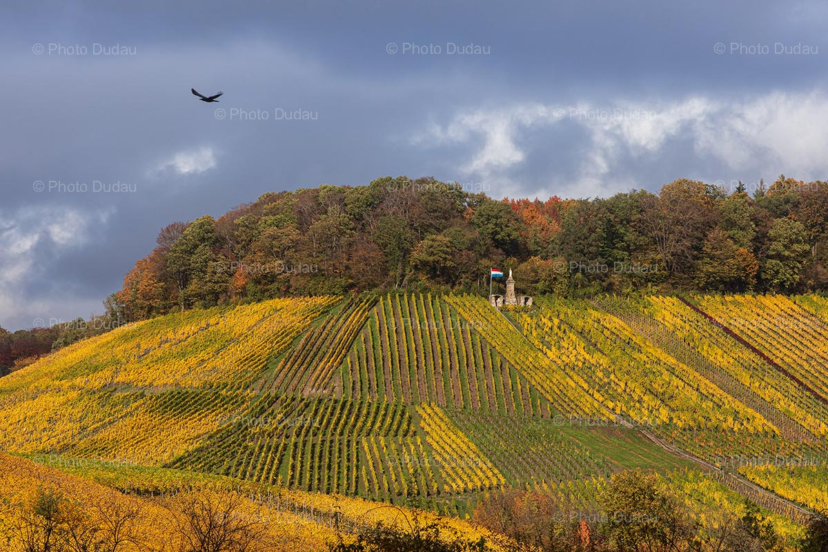 Luxembourg Moselle Vineyards
