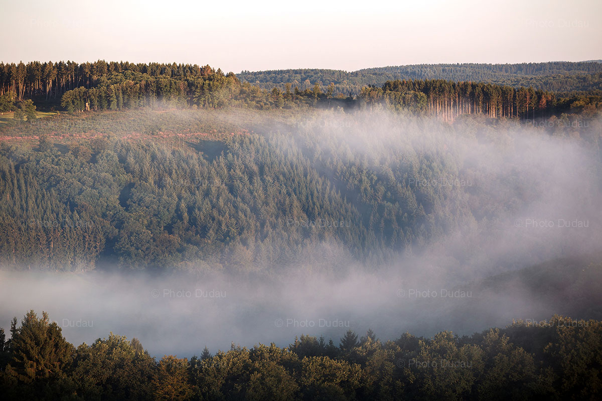 foggy forest in Upper Sure