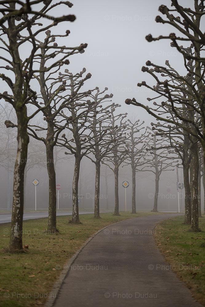Bare trees in Kirchberg