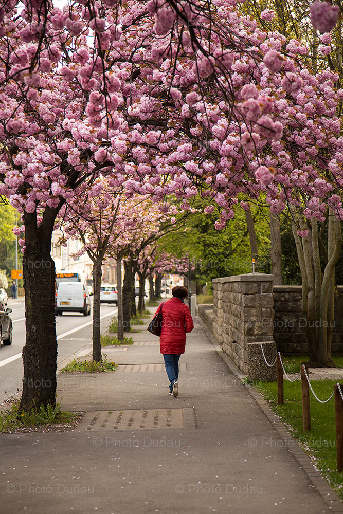 Spring in Hollerich, Luxembourg city